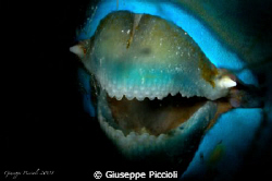 Night teeth by Giuseppe Piccioli 